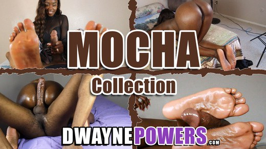 Mocha Collection